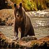 Bear Forest
