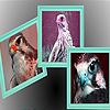 Falcon  in t