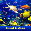 Find fishes.