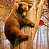 Funky bear i