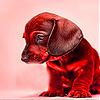 Shy puppy sl